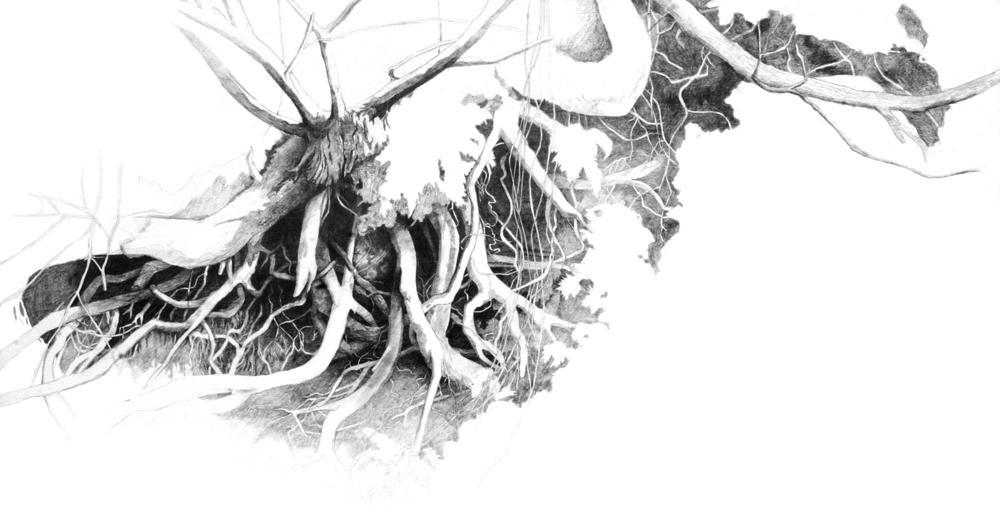 roots_OtisOR_1000px